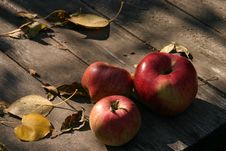 Free Sunny Apples Royalty Free Stock Image - 4326816