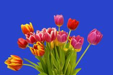 Free Spring Tulip Bouquet On Blue Stock Images - 4327134