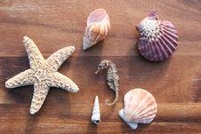 Free Sea Dweller Stock Photography - 4327172