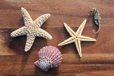 Free Sea Dweller Stock Photos - 4327203
