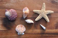 Free Sea Dweller Stock Photo - 4327250
