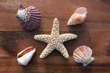 Free Sea Dweller Stock Photography - 4327262