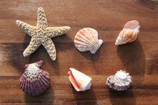 Free Sea Dweller Royalty Free Stock Images - 4327269