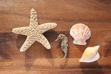 Free Sea Dweller Stock Photography - 4327302