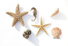 Free Sea Dweller Royalty Free Stock Photo - 4327305