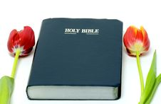 Holy Bible And Colorful Tulips Royalty Free Stock Images