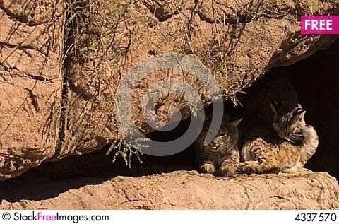 Free Cats On A Ledge Stock Photo - 4337570