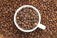 Free Coffee Cup Stock Image - 4330811