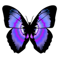 Free Butterfly 11 Royalty Free Stock Photo - 4331885