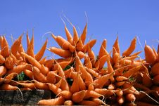 Free Carrot Display Stock Photo - 4331970
