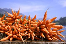Free Carrot Display Royalty Free Stock Photography - 4331977
