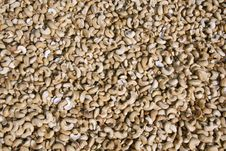 Free Dried Cashew Nuts Display Stock Image - 4331991