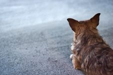 Free Dog Waiting Copyspace Royalty Free Stock Images - 4332549