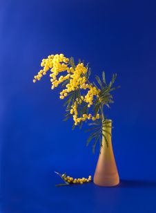 Mimosa In The Orange Vase Royalty Free Stock Photography