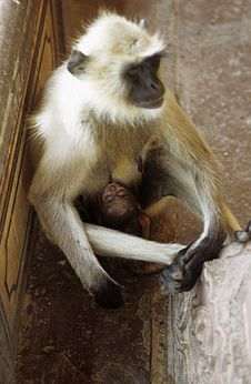 Free Monkey And Son Stock Images - 4333754