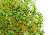 Close-up Of Fresh Green Delicate Cress Royalty Free Stock Images