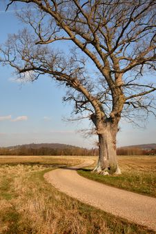 Free Lonely Oak Tree On An English Rural Landscape Stock Photo - 4335230