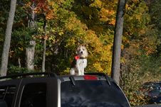 Free Guard Dog Royalty Free Stock Image - 4337446