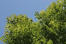Free Summer Foliage Royalty Free Stock Image - 4337866