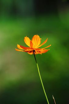 Free Flower Backlighting Stock Image - 4338761