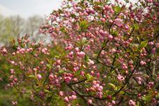 Free Flower Royalty Free Stock Photo - 4339745