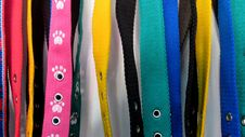 Free Leashes Stock Images - 43310504