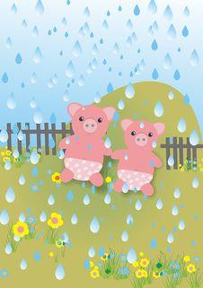 Free Pigs In Rain Stock Photo - 4340470