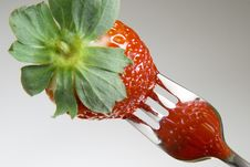 Free Strawberry On A Fork Stock Images - 4341734