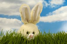 Free Easter Bunny Stock Image - 4342181