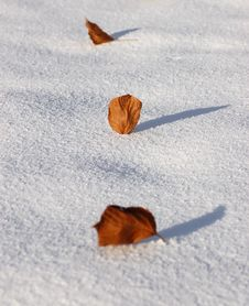 Free Leafage On The  Snow Stock Photography - 4342232