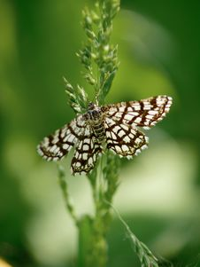 The Butterfly Sitting On A Grass. Stock Images