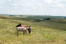 Free Horses In Green Meadows Royalty Free Stock Image - 4343366