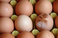 Free Eggs Royalty Free Stock Photos - 4343698