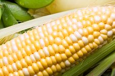 Free Corn Crazy Stock Photos - 4343883