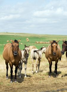 Free Mares And Foals In Pasture Stock Photos - 4344423