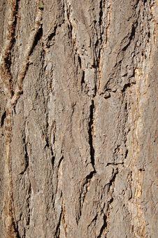 Free Bark Of Ginko Biloba Stock Images - 4346054