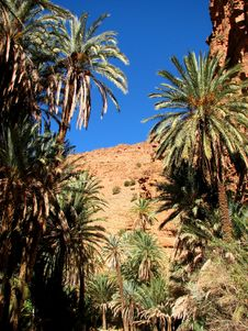 Free Palm Tree Of An Oasis In The Mountain In Morocco Stock Photography - 4346352