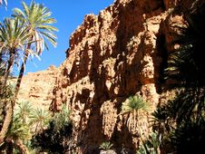 Free Palm Trees Of An Oasis In The Mountain In Morocco Stock Photography - 4346372