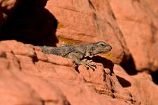 Free Lizard Stock Photo - 4348510