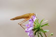 Free Katydid And Flower Royalty Free Stock Photos - 4349858