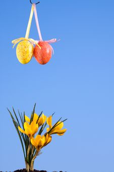 Easter Eggs And Crocus. Royalty Free Stock Photography