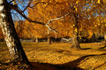 Free Woods In Autumn Stock Photos - 4354383