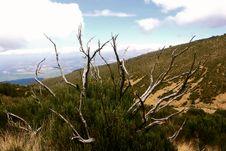 Free Mountain Kenya Royalty Free Stock Photos - 4350598