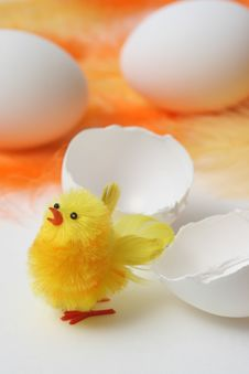 Hatched Easter Chick Royalty Free Stock Photography