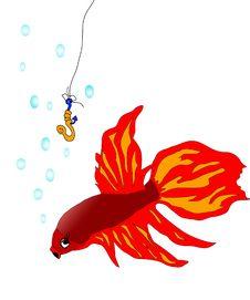 Free Red Fish Stock Photo - 4351020
