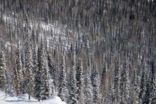 Free Alpine Slope Covered With Snow Stock Images - 4351494