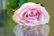 Free Rose Royalty Free Stock Image - 4352066