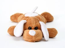 Free Soft Toy Dog Royalty Free Stock Photography - 4352467