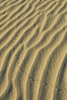 Free Sand Dunes Stock Photography - 4353702