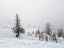 Free Plants And Trees In Fog And Snow Stock Photography - 4353822